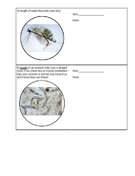 Estimating Specimen Size Using Field of View #2