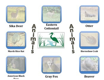 Estuaries and Animals:  Rivers Meet the Ocean (Incorporate with Water Cycle)