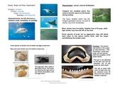 Estuaries and Nekton - Ocean Unit 12 Bundled
