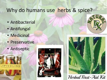 Ethnobotany Inquiry Lab natural herbs, spices and food as antiseptic - APES