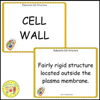 Eukaryote Cell Vocabulary Cards