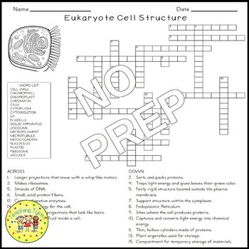 Eukaryote Cell Structure Crossword Puzzle