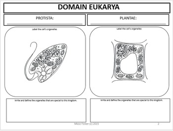 Eukaryote Cells: Graphic Organizer, Fold-Out Foldable, Interactive Notebook