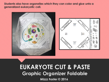 Eukaryote (complex cell) Cut & Paste One Page Graphic Organizer Foldable