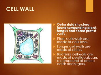 Eukaryotes: Complex Cells PowerPoint