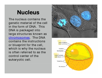 Eukaryotic Cell Interactive PowerPoint