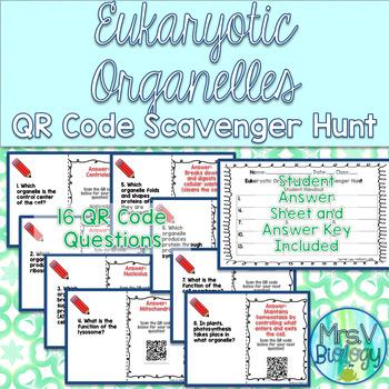 Eukaryotic Organelles QR Code Scavenger Hunt