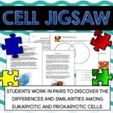 Eukaryotic + Prokaryotic Cell Jigsaw