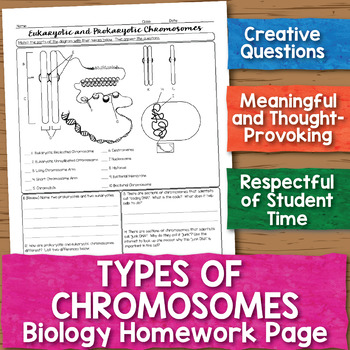 Eukaryotic and Prokaryotic Chromosomes Biology Homework Worksheet