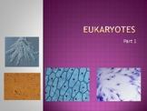 Eukaryotic cells - Characteristics, Taxonomy, Examples, an