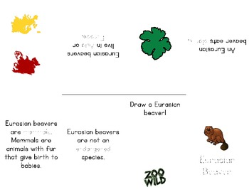 Eurasian Beaver -- 10 Resources -- Coloring Pages, Reading & Activities