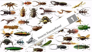 Eureka ELA Engage NY 2nd Grade Unit 8 Insects (16 powerpoints)