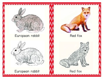 Europe: Animal of Europe Tracing cards