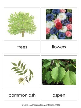 European Plants, 32 Three Part Cards, Europe continent kit Montessori