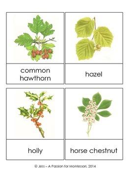 European Plants, 32 Three Part Cards, Europe continent kit Montessori
