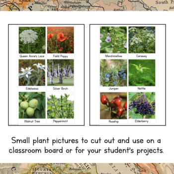 Europe Unit Study: Plants of Europe Information Cards