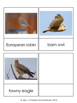 European Animal Cards, 15 Three Part Cards, Montessori Continent Box