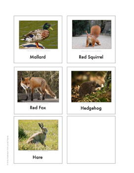 Continent Animal Cards, Europe