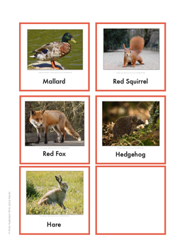 Continent Animal Cards, Europe (colored border)