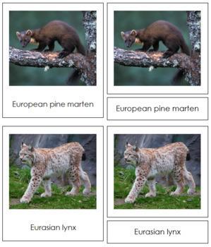 European Animals: 3-Part Cards