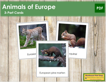 European Animals: 3-Part Cards