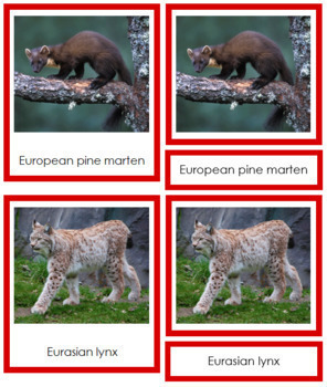 European Animals: 3-Part Cards (color borders)