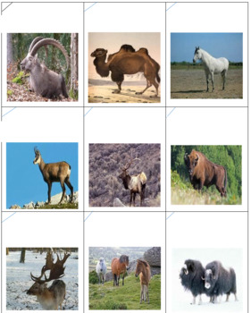 European Animals -- Checkers with a DIFFERENCE