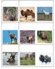 European Animals Concentration