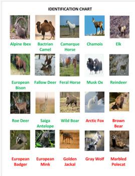 European Animals Jigsaw Puzzle