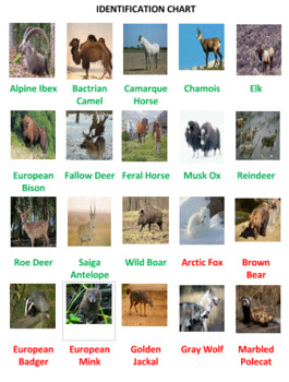 European Animals Word Search Puzzles