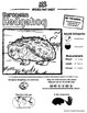 European Hedgehog -- 10 Resources -- Coloring Pages, Reading & Activities