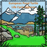 Turtle, European Pond (Life Cycle Spinner)