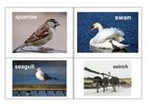 European birds cards