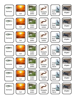 Everglades Food Chain