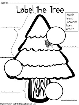 Evergreen (Christmas) Science Centers