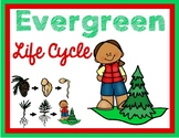Evergreen Life Cycle