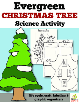 Evergreen Science and Art Activity