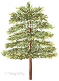 Evergreen Tree clip art, Printable Tracey Gurley Designs