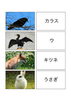 Animals in Japan Vocabulary Cards