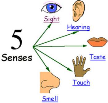 Everyday I use my senses