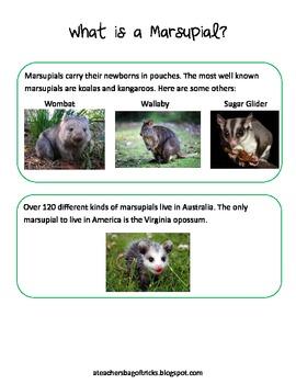 Everything Koalas - Math and Literacy Skills for k-3 & australia study