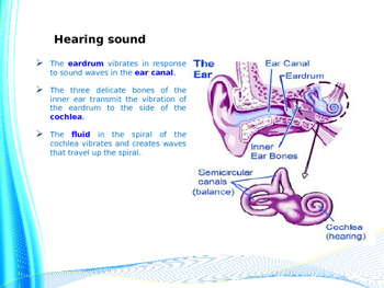 Everything You Need To Know About Sound Waves (Presentation & Handout)