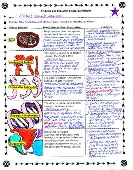 Evidence of evolution worksheet pdf