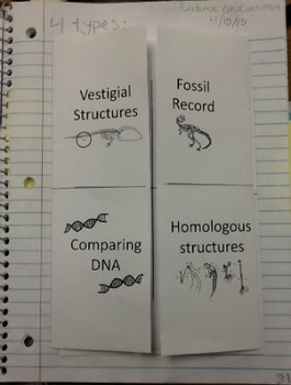 Evidence for Evolution Foldable Notes and Interactive Notebook Activity