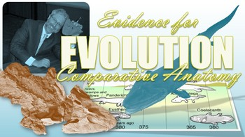 Evidence of Evolution, Comparative Anatomy