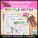 Evidence for Evolution Doodle Notes