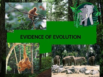 Evidence of Evolution PowerPoint