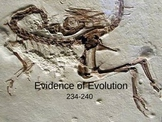 Evidence of Evolution PowerPoint Presentation