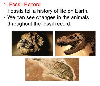 Evidence of Evolution SMART notebook presentation