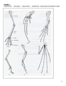Evidence of Evolution Web Based Lab